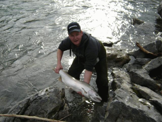 Male or Buck Steelhead